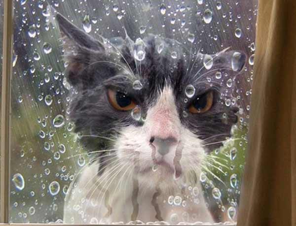 котик под дождем