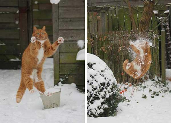 Кот ловит снежки
