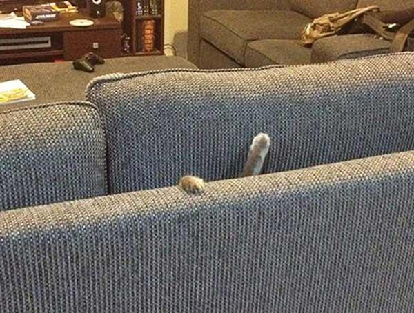 котика закрыли в диване