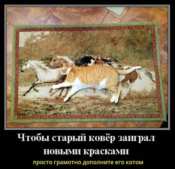 Кот в табуне лошадей
