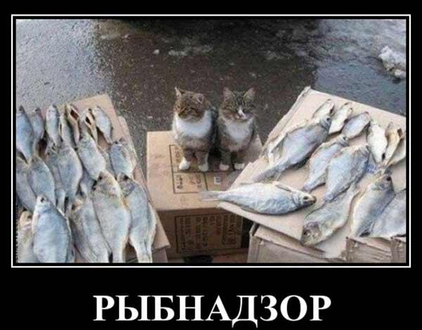 Настоящий рыбнадзор