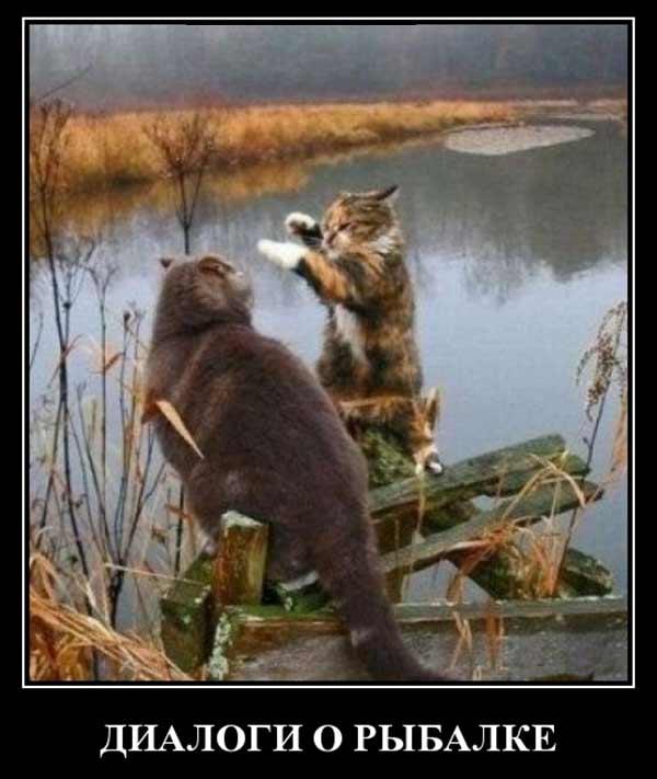 Коты о рыбалке