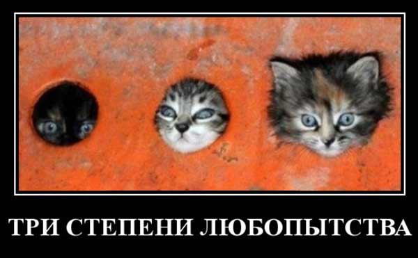 Три степени любопытства