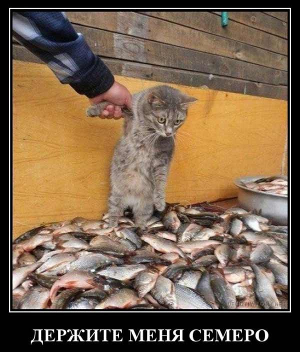 Котенок среди кучи рыбы