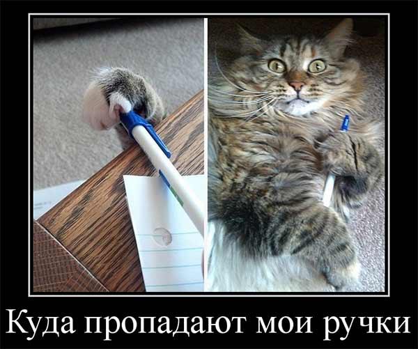 Прикольный кот
