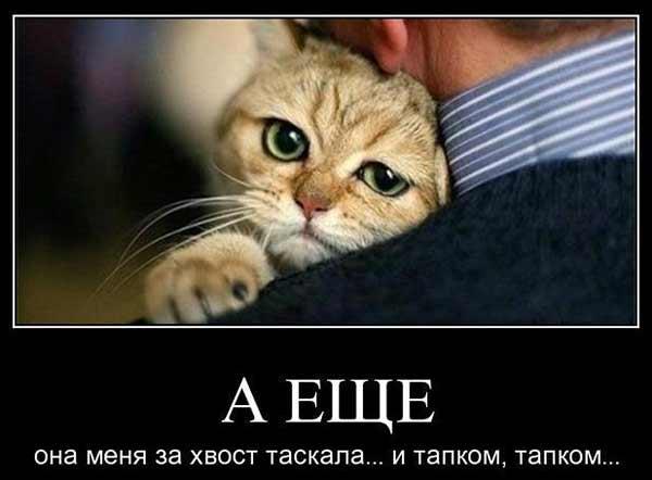 Кошка плакса