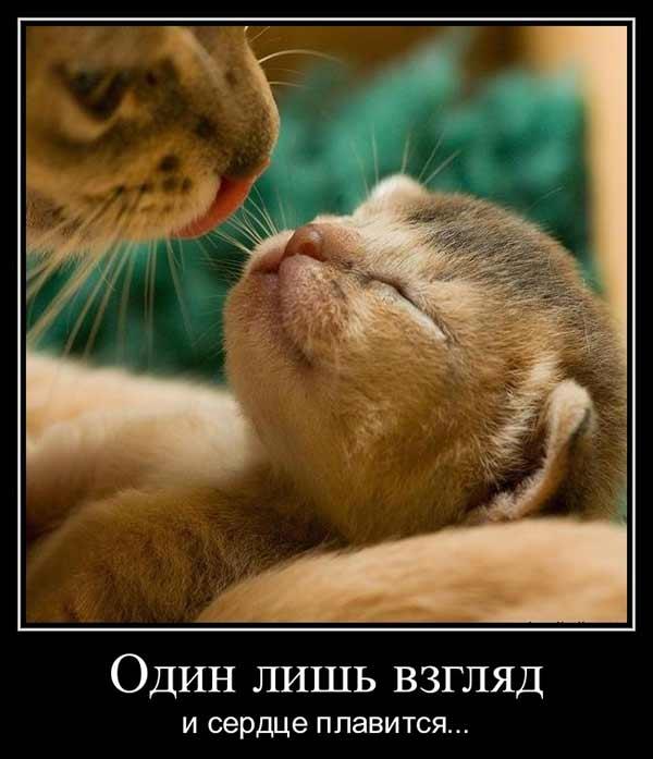 Милая кошачья сцена