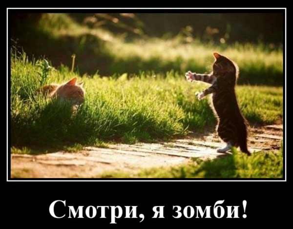 Кошачий зомби
