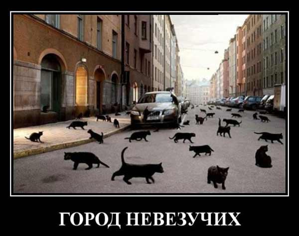 Город черных котов