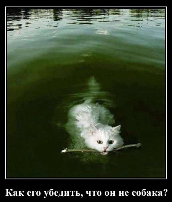 Кот не собака