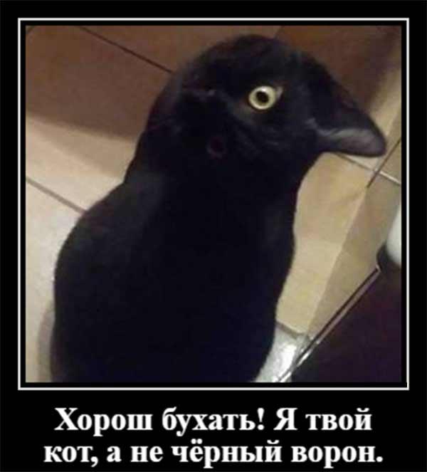 Не черный ворон, а кот