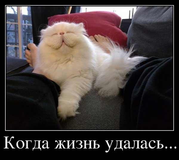У кота жизнь удалась