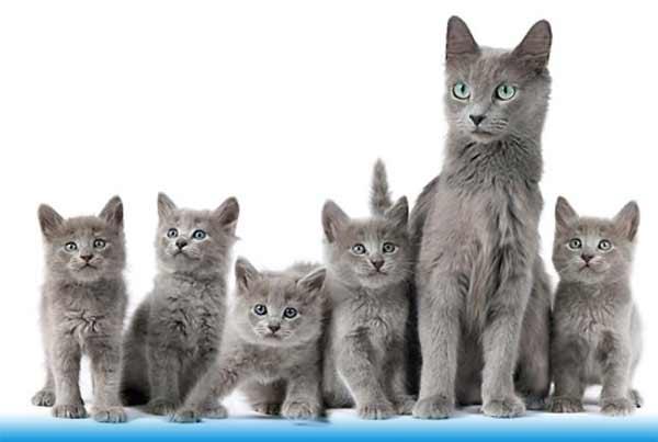 Нибелунги - кошка с котятами