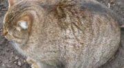 Фото толстых котов