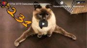 КОТЫ 2019 Смешные коты приколы про котов до слез