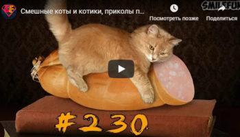 Смешные коты и котики, приколы про котов до слез