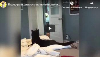 Видео о реакции кота на исчезновение хозяина