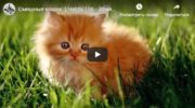 Смешные кошки:  20 минут смеха