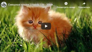 Смешные кошки: 30 минут смеха