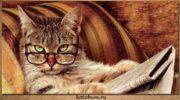 Кошки знают свое имя