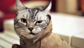 Модные кошки 2019