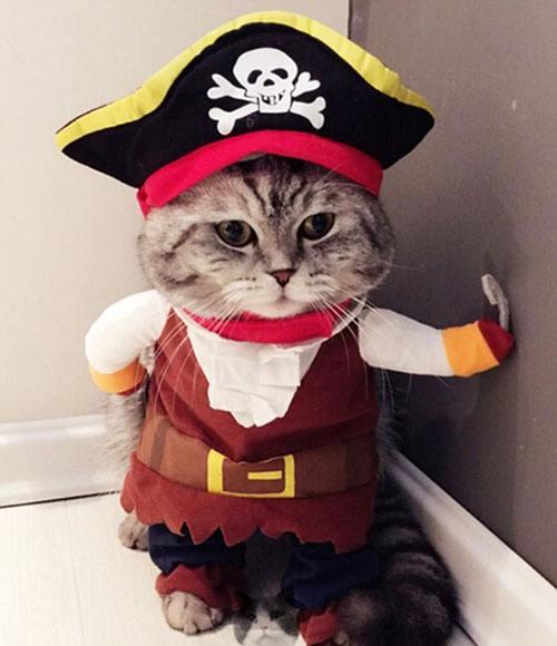 Костюм пирата для кота