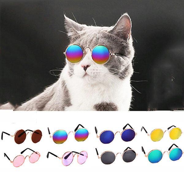 Модные очки для кошки