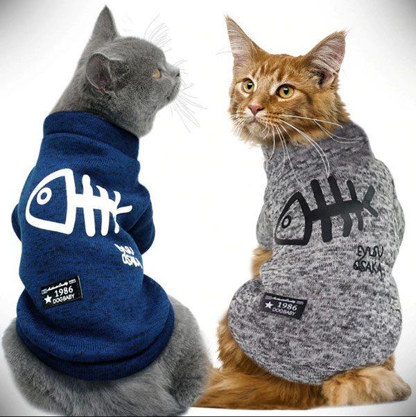 Зимняя одежда для кота