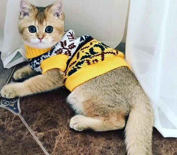 Зимний свитер для кота