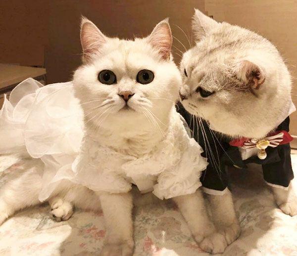Костюм жениха и невесты