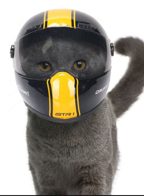 Мотоциклетный шлем для кота