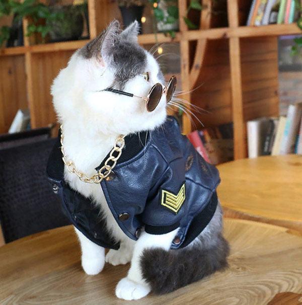 Кожаная куртка для кота