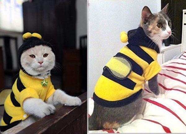Костюм пчелы для кошки