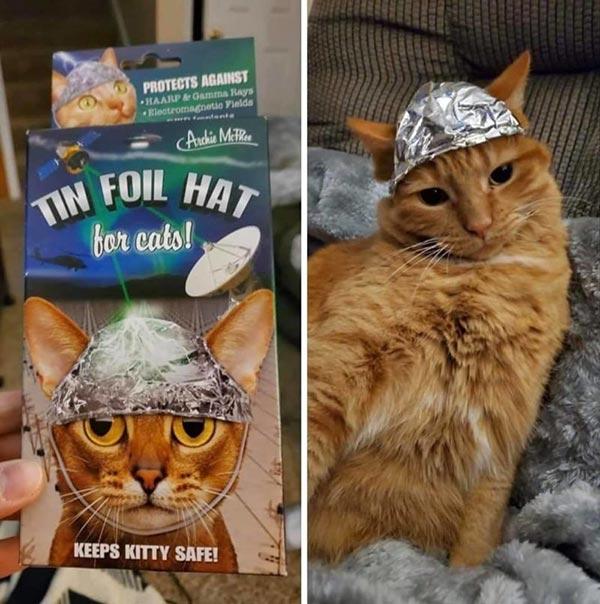 Фото милых и смешных котиков