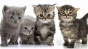 Фото маленьких и милых котят