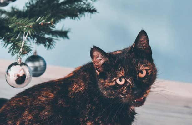 Фото кошки и новогодней елки