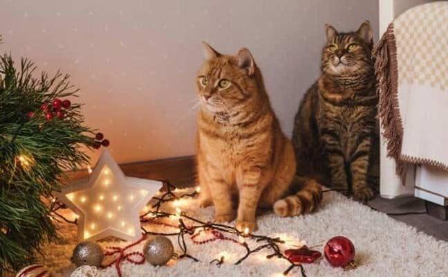 Кошки и новогодняя елка фото