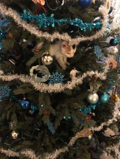 Фото кота и новогодней елки