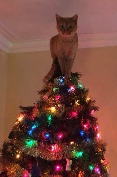 Кот залез на елку фото